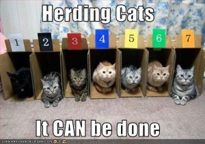herding cats can be done